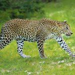 wildlife_srilanka_12