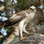 wildlife_srilanka_19