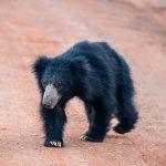 wildlife_srilanka_2