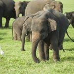 wildlife_srilanka_23